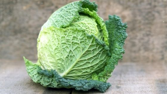cabbage food on a table and it starts c